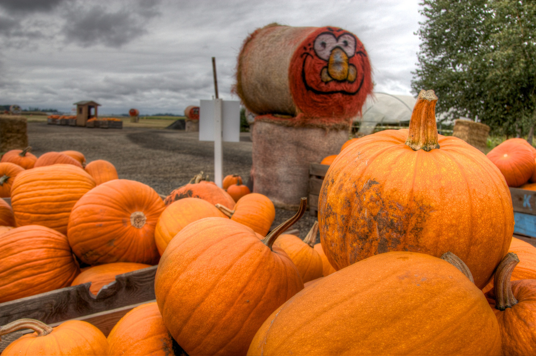 Oregon Pumpkins